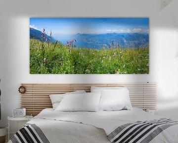Alpenflora am Monte Baldo Italien von Susanne Bauernfeind
