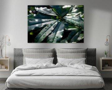 botanisches Bild einer grünen Pflanze, Landhausstil von Karijn | Fine art Natuur en Reis Fotografie