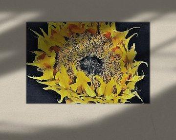 De Zonnebloem nog even in Vuur en Vlam - Schilderij