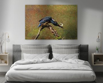 Eisvogel mit Garnele von Rudy & Gisela Schlechter