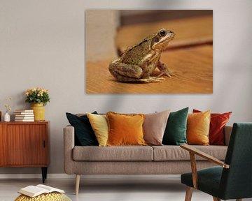 Frosch im Haus! von Picture Partners