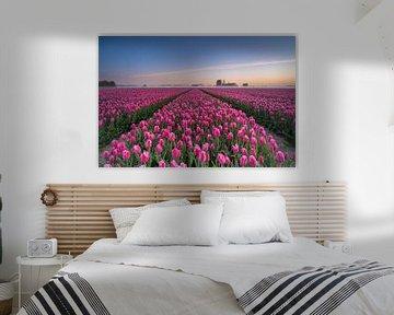 Tulipes néerlandaises sur Alvin Aarnoutse