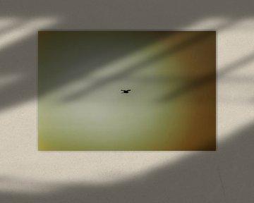 One day I'll fly away van Jurjen Jan Snikkenburg