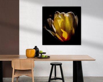 Tulpe in schönem Sonnenlicht von Dick Jeukens