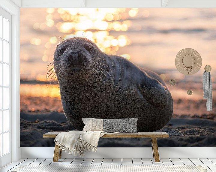 Sfeerimpressie behang: Zeehond op het strand van Thom Brouwer