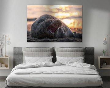 Zeehond gapend aan het strand van Thom Brouwer