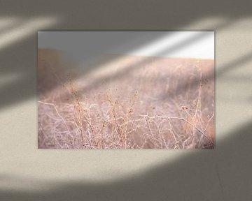 Weiches Licht bei Sonnenaufgang   Auf der Wiese von Wendy Boon