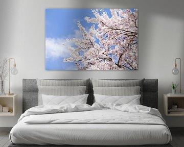 Bloesemboom met bloemen en blauwe lucht in Nederland van Evelien Oerlemans