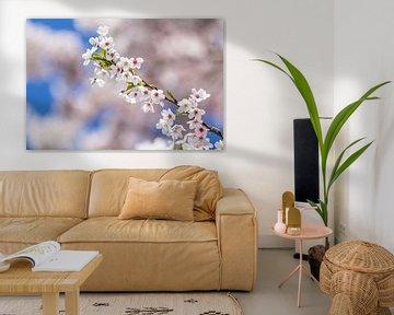 Close-up van prachtige bloesem in de lente van Evelien Oerlemans