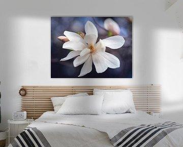 Magnolia bloesem close-up in de lente van Evelien Oerlemans