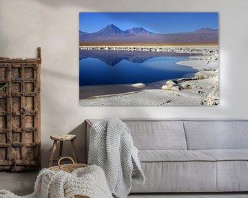 Cejar lagune van Antwan Janssen