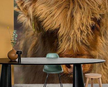 Schotse hooglander kalfje up-close van Leo Kramp Fotografie