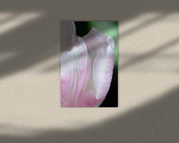 Rosa Tulpenblatt von Anita van Hengel