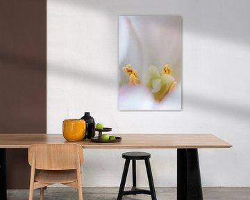 Verborgenes Herz einer Tulpe von Anita van Hengel