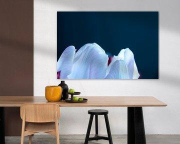 Spitze einer Tulpe von Anita van Hengel