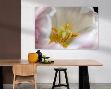 Im Herzen einer Tulpe von Anita van Hengel