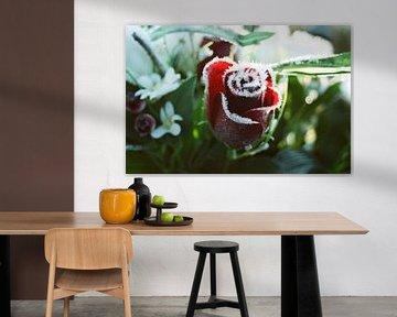 Rote Winterrose von Michel Kruiswijk