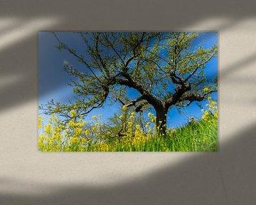 Der Baum in Blüte von Tina Linssen