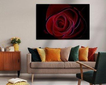 Rote Rose von De Rover