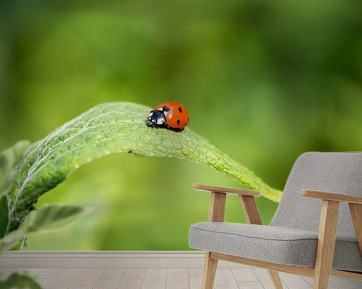 Sfeerimpressie behang: Lieveheersbeestje sfeervol op een groen blad van Arthur Hooijer