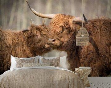 Schotse  Hooglanders van Annie Jakobs