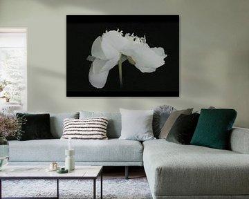 Die tanzende Pfingstrose - Weiß auf Schwarz - Gemälde von Schildersatelier van der Ven