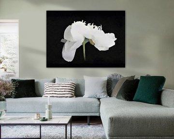 De Dansende Pioen - Wit op Zwart - Schilderij