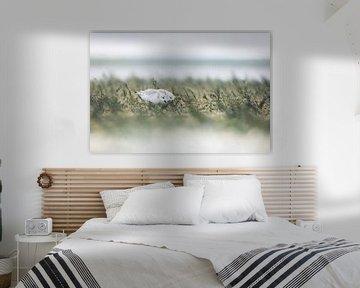 Drieteenstrandlopers op Texel van Danny Slijfer Natuurfotografie