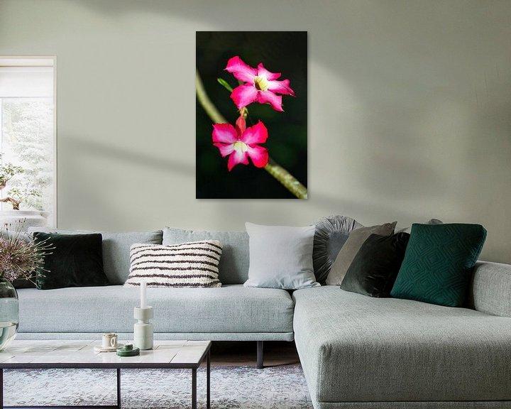 Impression: Rose du désert sur Eduard Lamping