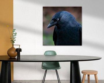 Kauen oder Porträt von Crow von Klaartje Majoor