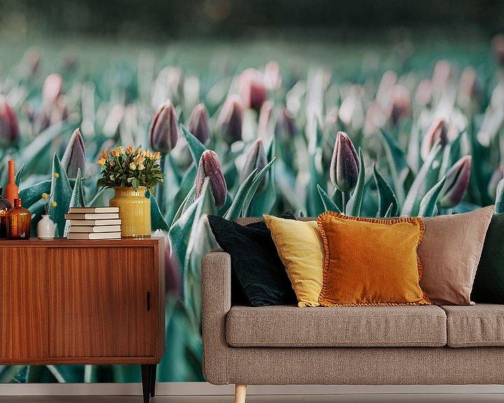Sfeerimpressie behang: Tulpen in de ochtend van Miranda Snoeijen