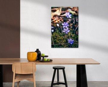 Der Frühblüher von D.R.Fotografie