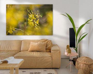 gelbe Blumen von Janny Beimers
