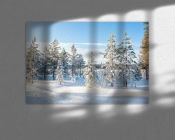 Neige sur les arbres en Laponie sur Rene du Chatenier