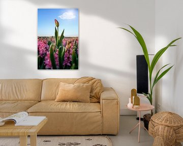 Tulpe herausragend über andere Blumen an einem sonnigen Tag im Frühling von Chihong