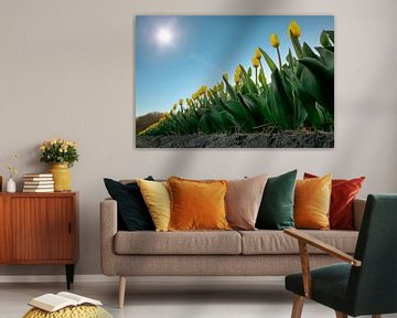 Gelbe Tulpen in einer Reihe an einem schönen sonnigen Tag im Frühling von Chihong