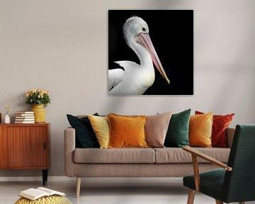 Portret van een pelikaan op een zwarte achtergrond van Els Peelman