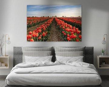Rood tulpenveld van Michael Valjak