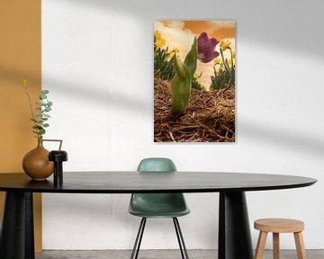 Die Tulpe im Narzissenland von Elianne van Turennout
