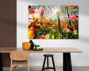 Kleurige Tulpen