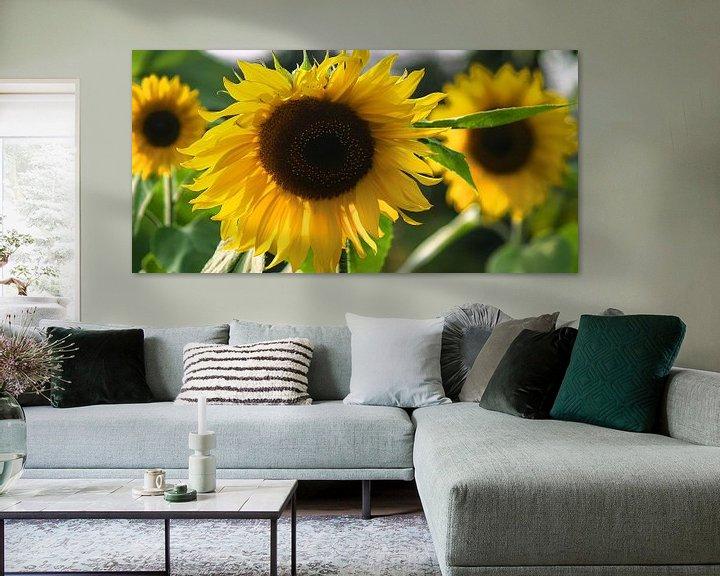 Beispiel: SonnenblumeSonnenblumen-Studien-001-7035 von Peter Morgenroth