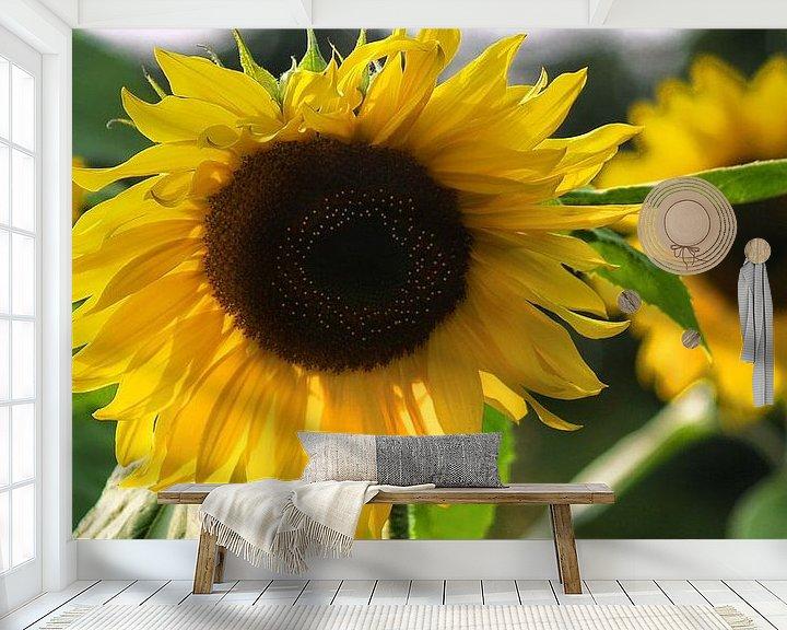 Beispiel fototapete: SonnenblumeSonnenblumen-Studien-001-7035 von Peter Morgenroth