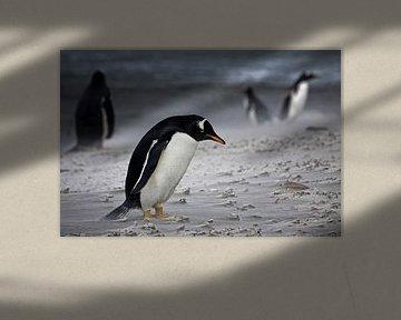 Pingouin gentoo Dans la tempête