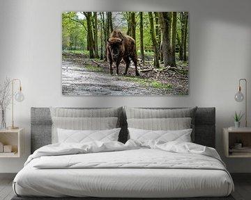 Les yeux dans les yeux avec un bison européen sur Heleen de Silva