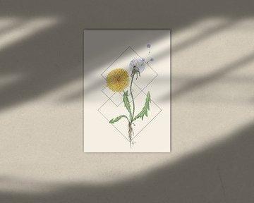 Feminine Focus | De Paardenbloem van Kirsten Jense Illustraties.