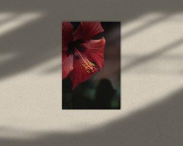 Rote Blume Detail von Anke Kaal
