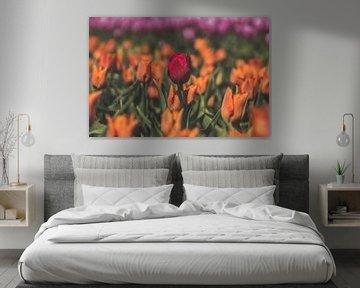 Bunte Tulpenfelder von Kelly Sabrina