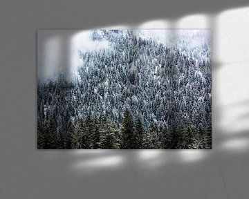 Winterbos in de bergen met mist van Frank Herrmann