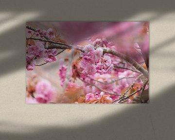 schöne rosa Frühlingsblüte von Janny Beimers