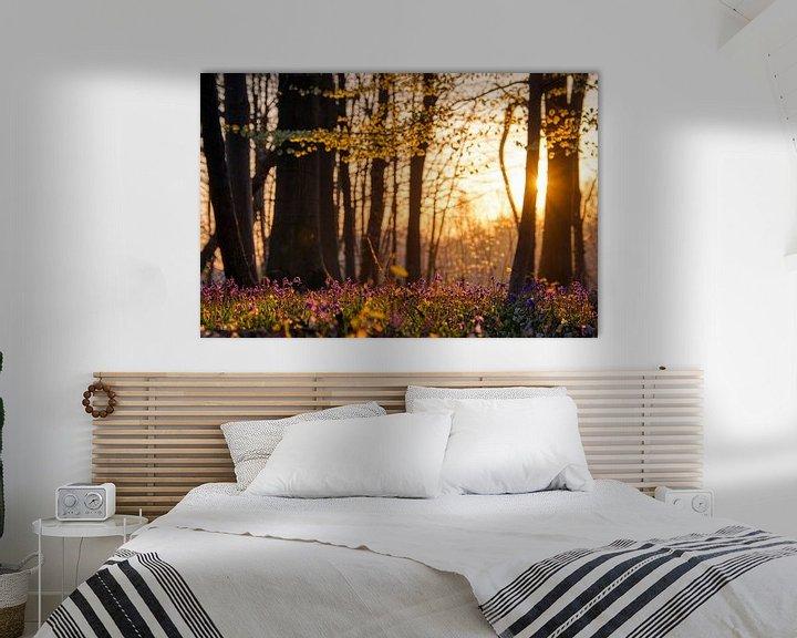 Sfeerimpressie: De zon ontwaakt in het bos van Jim De Sitter